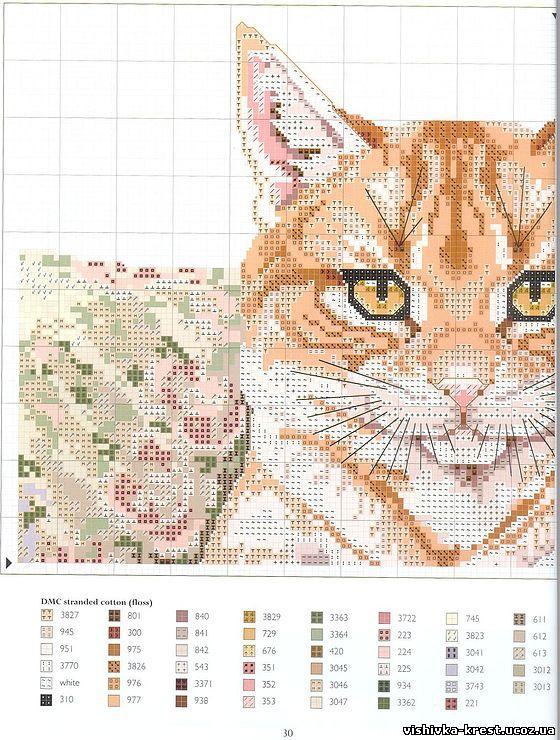 Рыжий котик бесплатная вышивка